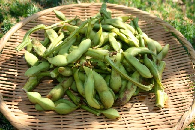 兵庫県篠山市発企業共同事業で「丹波黒枝豆」の六次産業化を目指し、世界ブランドへ展開