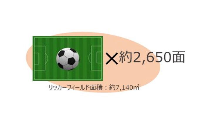 ビーフンづくりに必要な田んぼの面積はサッカーフィールド2650面分!?